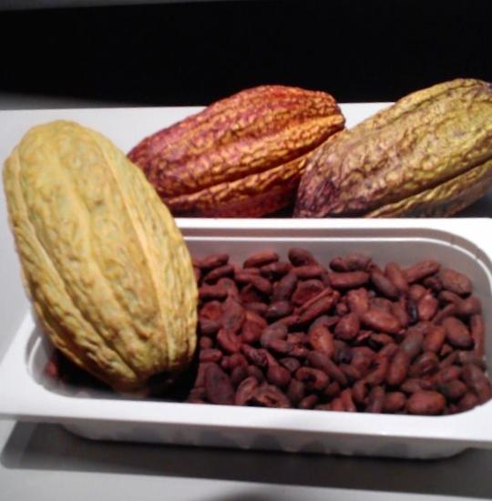 Simón Coll cacao